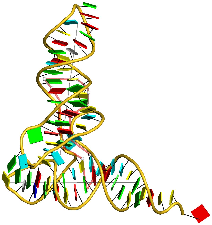 """the L-shaped tRNA 1ehz"" title=""the L-shaped tRNA 1ehz"""