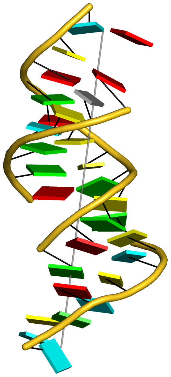 """the vertical helix of the L-shaped tRNA 1ehz"" title=""the vertical helix of the L-shaped tRNA 1ehz"""